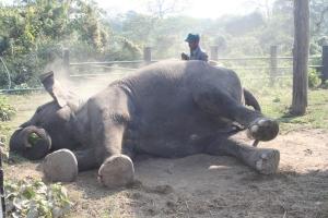 elephant-couche
